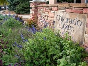 Colorado-State-University-300x225